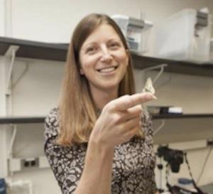 Ecology, Evolution and Behavior:  Dr. Emilie Snell-Rood