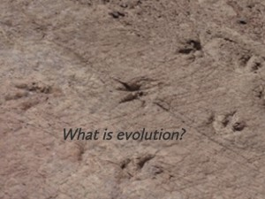 Evolution 1: Evidence-High School Resource